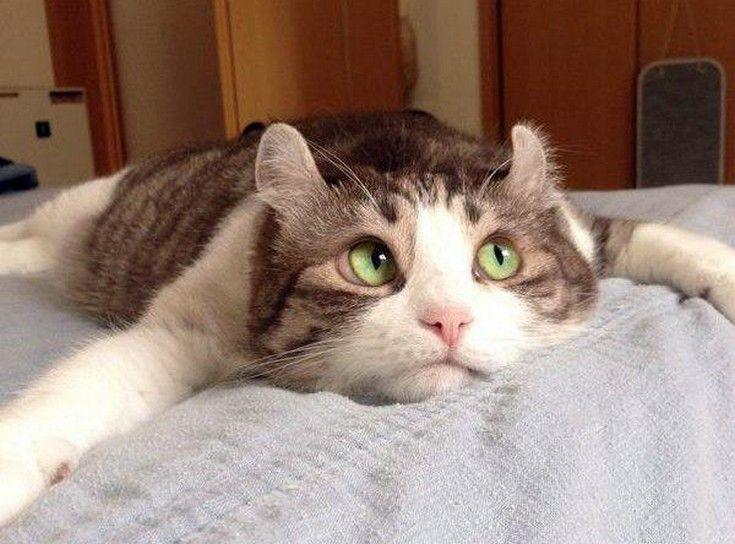 """...just thinkin' about cat stuff"""
