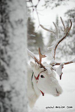 Reindeer. <3 Jan 28 17 <3
