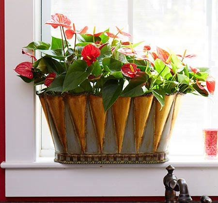22 Best Colorful Houseplants To Decorate Your Home Or 400 x 300