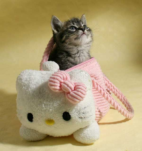 .Kitty Cat, Hello Kitty Purse, Art, Baby Kittens, Adorable, Hellokitty, Hello Kitty Bags, Cat Lovers, Animal
