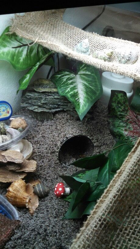 "Hermit crab set up 3: mason jar covered with sand and filled with moss as a humid ""cave"""