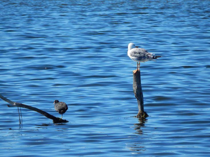 Fauna nell' Oasi WWF Lago di Burano - Capalbio