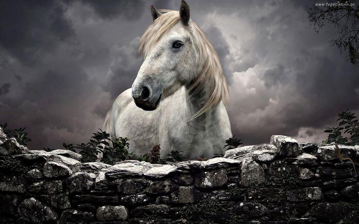 Biały, Koń, Kamienna, Zagroda, Chmury