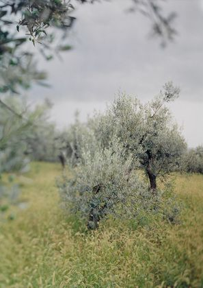 JoAnn Verburg. Little Green Tree (with olives). 2003