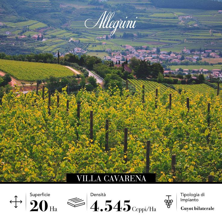 At an altitude of almost 1/4 mile, the Allegrini Villa Cavarena has become one of the most important vineyards in all of the Valpolicella area. Located in the village of Mazzurega, it is believed that the stones for the Arena in Verona were quarried here.