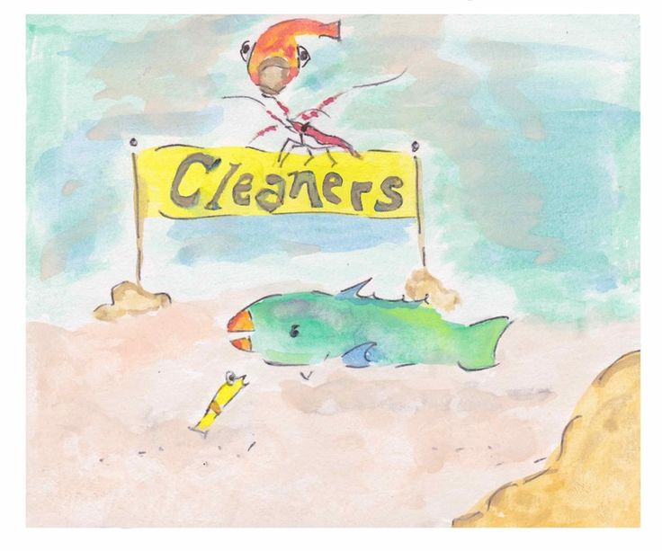 "Illustration- ""A Parrotfish's Tale"" by Christina Maas // cleaner station, cleaner shrimp, cleaner fish // parrotfishpublishing.com"