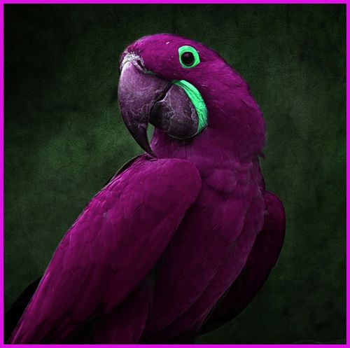 A purple parrot...really? Gorgeous!Colors Combos, Exotic Birds, Polar Bears, Purple Parrots, Purple Passion, Lunches Boxes, Colors Combinations, Painting Colors, Hyacinth Macaw