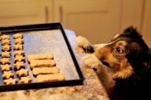 Biscotti per cani fatti in casa Questi sono preferiti da molti cani. Mescola 300 g di farina di segale e 150 di farina bianca. Aggiungici 1 uovo e due scatolette di tonno al naturale senza sale. Se l'impasto risultasse duro aggiungi dell'acqua. Una volta ritagliato l'impasto nella forma che desideri, lo infornerai in forno già caldo a 150 gradi per circa 40-50 minuti.