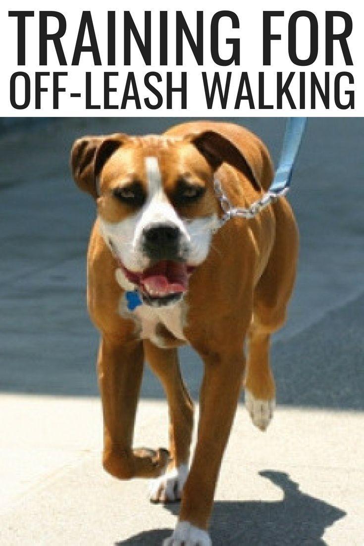 Training For Off Leash Walking Dog Training Basic Dog Training