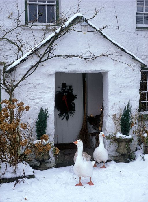 Geese in snow by porch of traditional white farmhouse -