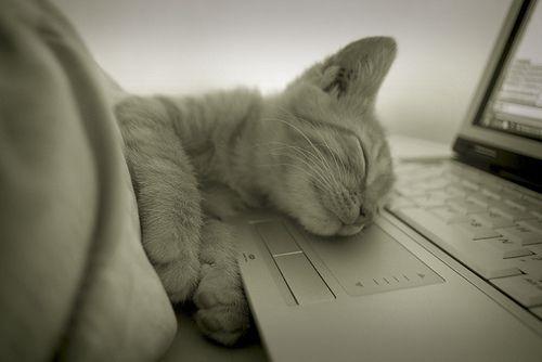 : Work Hard, Sleepy Kitty, Late Night, Night Night, Cat Naps, Night Shift, Crazy Cat, Naps Time, Sweet Dreams