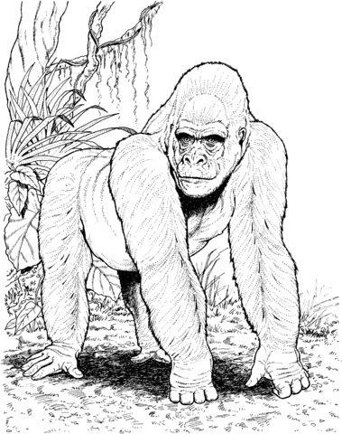 Gorila en el Bosque Dibujo para colorear | animales | Pinterest ...