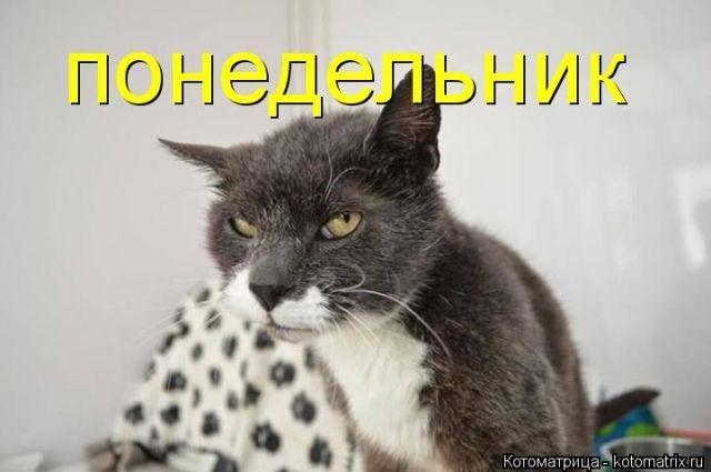 Лучшие котоматрицы за прошедшую неделю / Питомцы