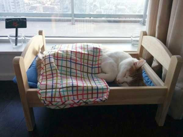 北欧発のオシャレ家具屋さんIKEA(イケア)の商品【「DUKTIG」シリーズの人形用ベッド】がある使い方で評判になっています。それは『猫様専用ベッド』…!!本来は子供用のおままごとセットやごっこ遊びに使うことを想定されて作られたおもちゃの木製ミニベッド。そんなキッズ用のグッズが猫サイズにピッタリ♡フカフカのお布団でお休みになられる猫様がご覧いただけます。猫好きにおすすめの商品をご紹介します♪ | ページ2