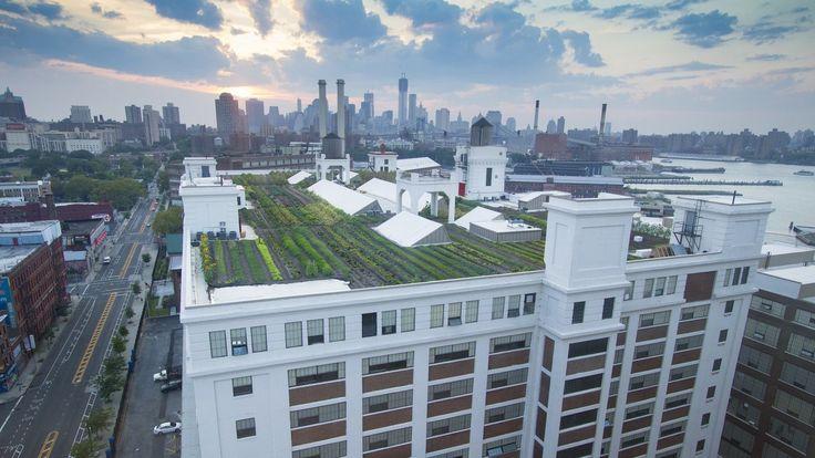 Brooklyn Grange - A New York Growing Season