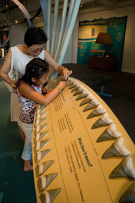 Touch this set of 46 Megalodon teeth (casts of an unusual intact find) and learn what scientists can discover by studying shark teeth.