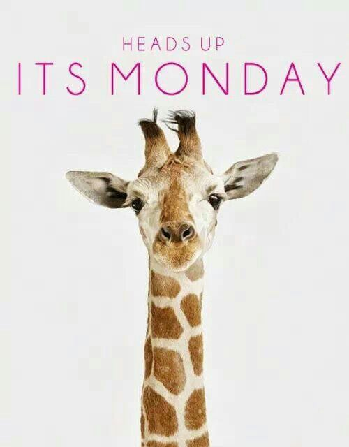 Muy buenos días... ¡Cabeza alta, que es lunes! ♥ Good morning... Heads Up, It's Monday!
