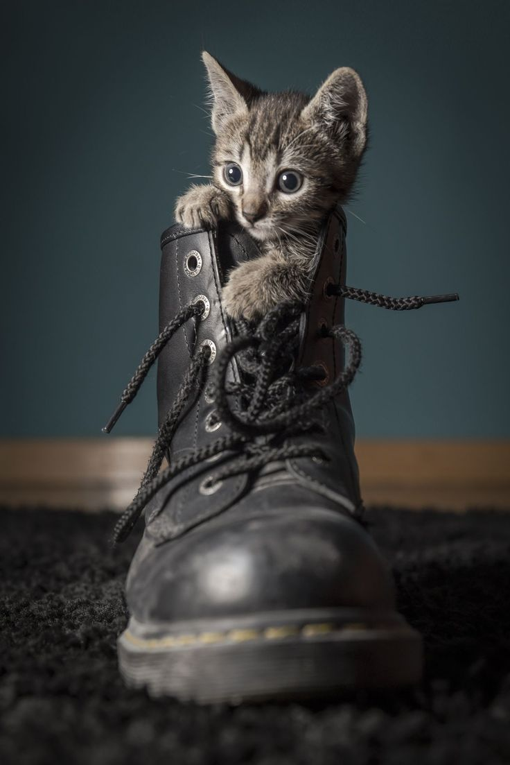 Such a cute kitten photo! Photo Credit: jpg by Aitor Rioja on 500px. From https://500px.com/photo/95605539/jpg-by-aitor-rioja