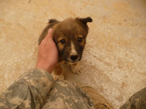 so cuuuute!: Adorable Doggies, Puppies, Soldiers, Ate Everything, Man Best Friends, Favorite Dogs, Us Army, Guys, Dogs Photo
