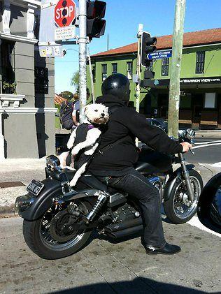Mr Pettibone strapped in for the ride