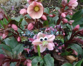 Postcard: Eyes see you in Spring (By MargOntwerp)