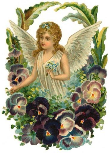 Viola angel