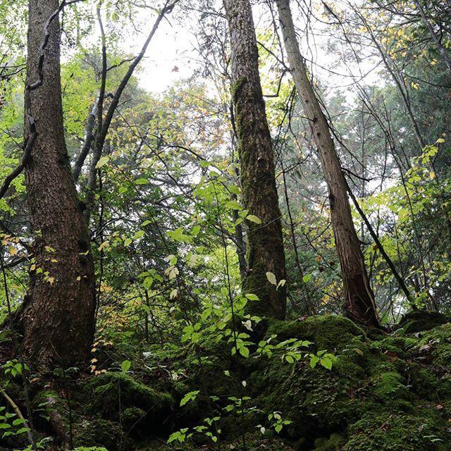 【aozoracafe123】さんのInstagramをピンしています。 《世界遺産の森#青木ヶ原樹海#富士山#世界遺産#森#森林#緑#グリーン#ハイキング#樹海#山梨県#eos80d#canon#単焦点レンズ#efs24mm#パンケーキレンズ#神秘的#パワースポット#自然#nature#Japan#写真好きな人と繋がりたい#ファインダー越しのわたしの世界#紅葉満喫旅#苔》
