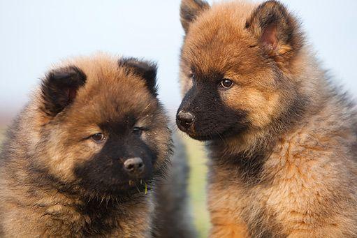 psí plemena - Hledat Googlem