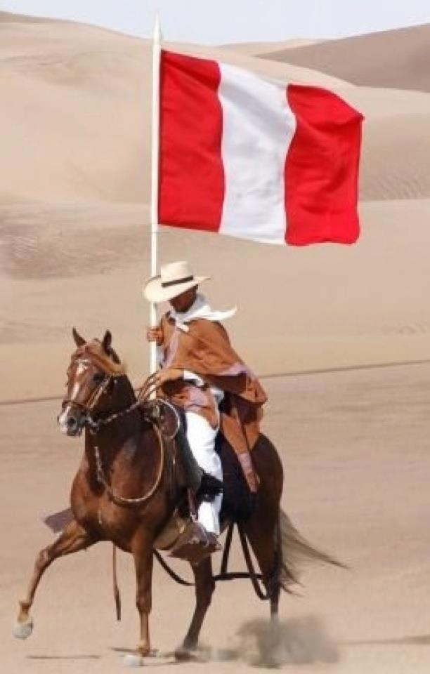 Caballo de Paso Peruano - Peruvian  Paso Horse - One of the finest breeds in the world.