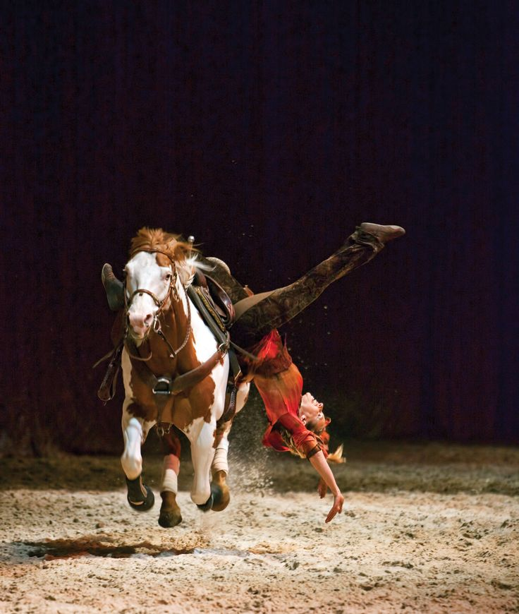 would like to learn to trick ride This girl isn't falling off the horse she is…