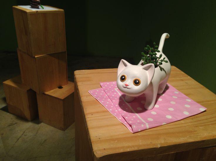 cat & succulent