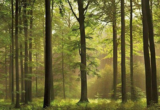 Fotomuur Herfst Bos voor een echte autumnlook in de kamer!