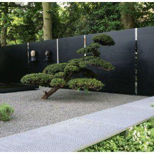 bonsai in the yard. modern.