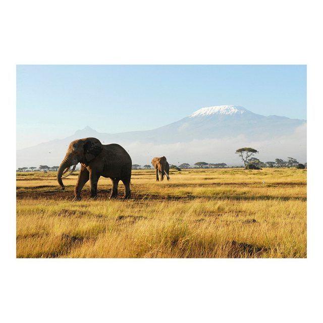 Bilderwelten Vliestapete Premium Breit »Elefanten vor dem Kilimanjaro in Kenya« online kaufen