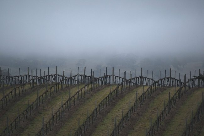 Vintage at rest | Winter in the Adelaide Hills images | adelaidenow