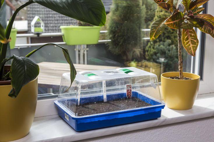 5 Pflanzen, die Sie im Februar aussäen können