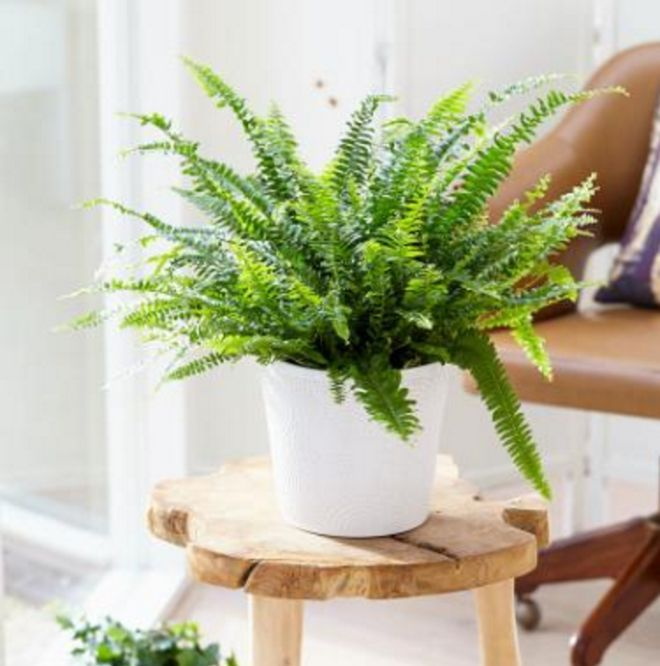 Household plants are more than just decorative features. Simply having these in your home can have incredible benefits.