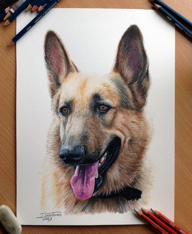 """'German Shepherd' - pencil drawing by AtomiccircuS, via deviantART   ...""""schaefer"""" is German for """"shepherd""""..."""