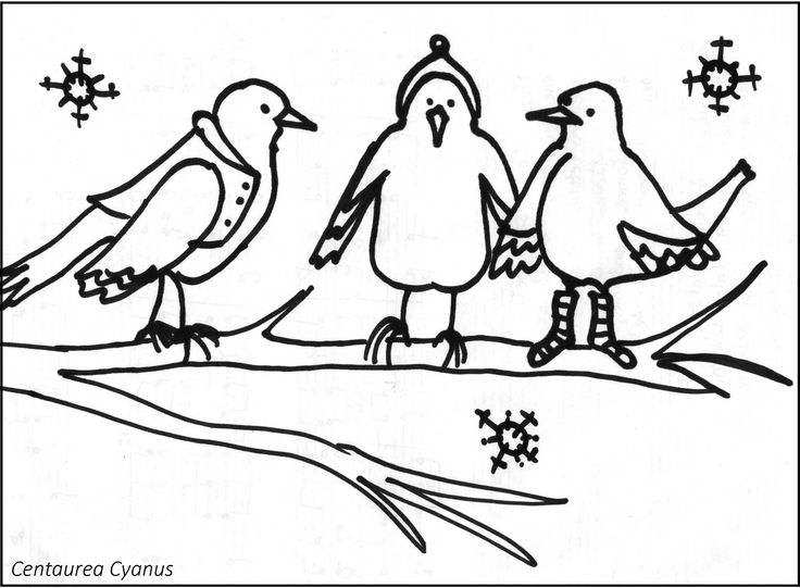 free coloring page by Cenaturea Cyanus - three birds - winter - három rigó ül az ágon