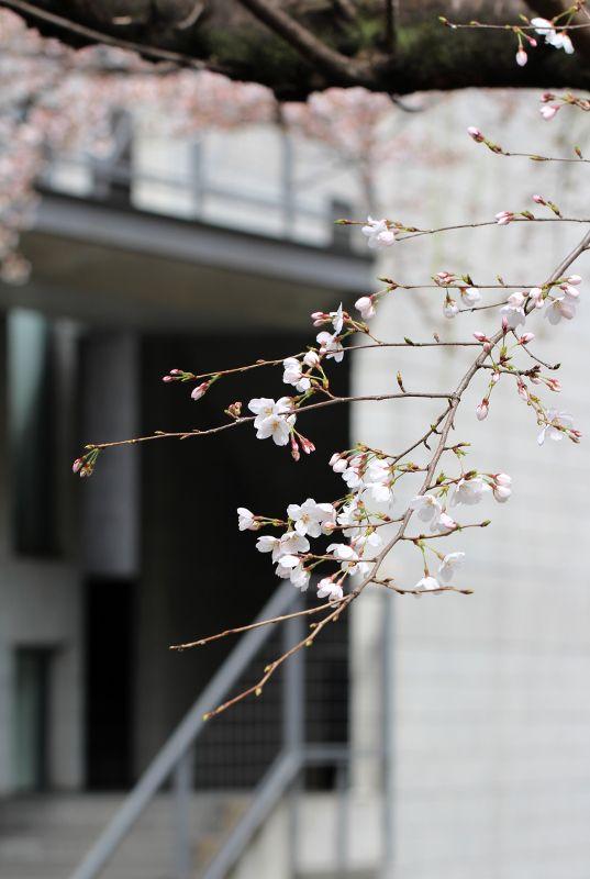 Kyoto, Japan 高瀬川 (Photo : Gallery I) https://www.facebook.com/Kyoto.GalleryI