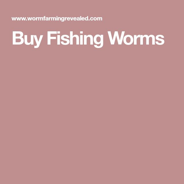 Buy Fishing Worms