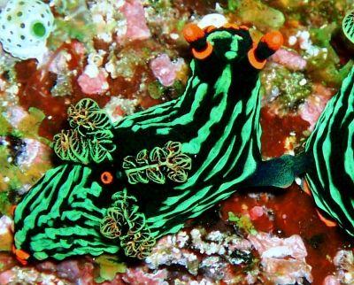 дайвинг на острове Сулавеси - Ask.com поиск по картинкам