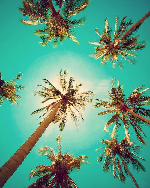 Sitting under the palm trees :)