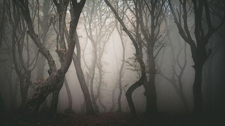 Transylvánský les je místem děsu. Dochází vněm kpodivným událostem– Novinky.cz