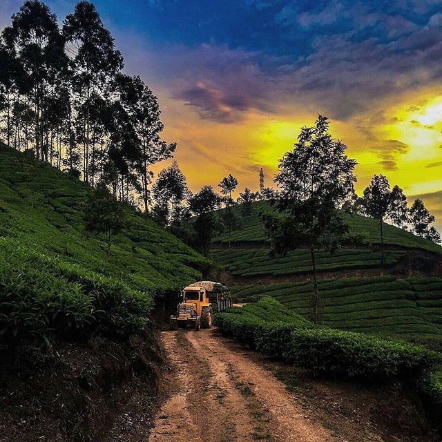 Good morning, Munnar! .  This incredible photo was shared by @mashkainaction! Tag your photos with #trellingbangalore to be featured. .  For more amazing locations, download Trell app! Link in bio. . . .  #teagarden #incredibleindia #lonelyplanetindia #travelbug #beautiful #morning #bangalore  #peace #sunrise #instacool #sky #tuesday #sunrise_sunsets_aroundworld #skyporn #natureporn #nature #naturelovers #landscape #picoftheday #instamood #instapic #natureporn #streetphotography…