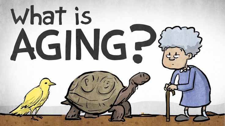 Brilliant animated video about what aging is and what we might do about it.