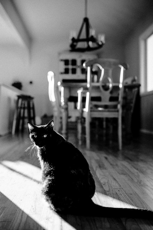 Instagram Worthy Photo Ideas National Day List August 2019 Black Cat Appreciation Day List Of National Days Free Halloween Pictures