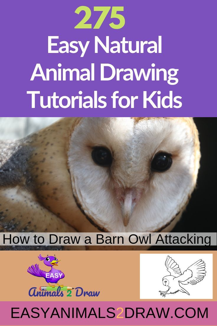 How To Draw An Amazing Barn Owl Attacking Step By Step In 2020 Barn Owl Drawings Animal Drawings