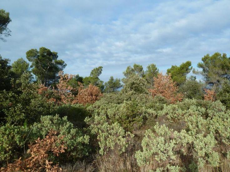 Terrain de loisir à 15 min d'Iter Cadarache et 30 minutes d'Aix en Provence. Ce terrain en position dominante non constructible dispose d'une citerne d'eau enterrée de 60 000 litres, magnifique vue dégagée, arboré de chênes, de pins, situé en colline en zone naturelle espace boisé classé à proximité du village de Jouques accès facile par chemin goudronné, terrain à voir Autour d'Aix MDT733EC