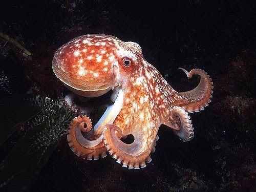 octopus eye  google search in 2020  octopus photos
